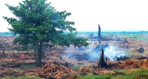 Peatland-Indonesia  Need for effective management of peatlands, forest fires land clearing