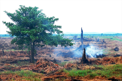 Peatland, Indonesia  Need for effective management of peatlands, forest fires land clearing