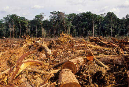 Illegal logging negatively impacting IGR, laments Ogun  Indonesia, EU agree on moves to curb illegal logging logging