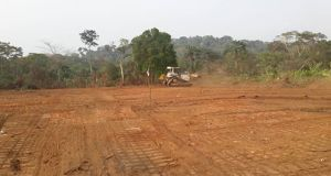 bulldozers  Cross River shuns stop-work order, clears forest ahead highway project Ekuri2 Superhighway route passing through parts of Boki