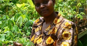 Dr. Margaret Karembu  Africa planted millions of hectares of GM crops in 2015 – ISAAA Dr
