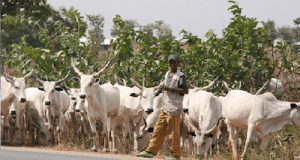 Fulani-Herdsmen-Nigeria
