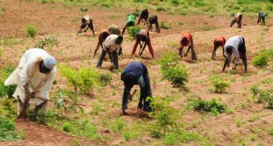 Farming  Farming, forestry top list of jobs most linked to suicide Farmers in Nigeria