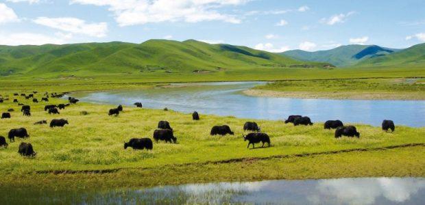 A wetlands ecosystem