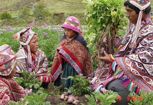 Farmers in Peru. Photo credit: International Institute for Environment and Development