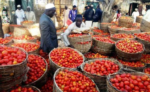 The tomatoes scarcity in markets forced Nigeria to import the item from Cameroon and Ghana. Photo credit: authorityngr.com