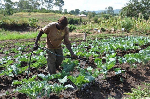 A Kenyan farmer