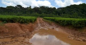 roads-heading-to-the-forest-are-already-delapidated-due-to-uveruse-by-heavy-trucks-p50