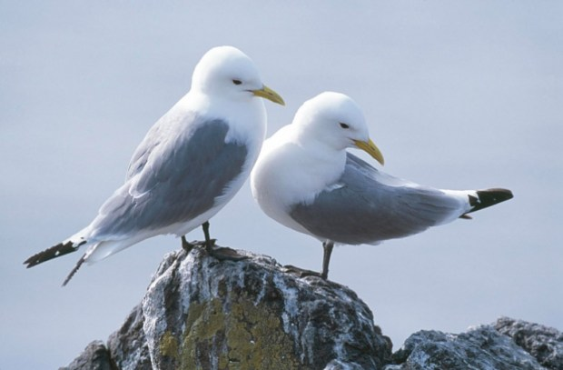 Seabirds in the high seas of the North Atlantic  BirdLife suggests protection for North Atlantic seabirds Seabirds
