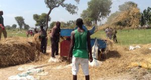 VCDP provided rice threshing machine being put to use at Sumaka Farm Site, Ukpiam, Guma LGA, Benue State