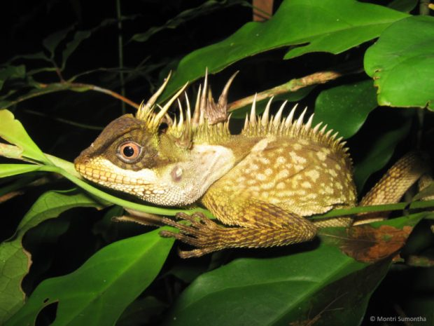 163 new species discovered in South East Asia Li e1483022913691