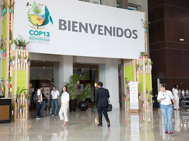 The technical document was launched during the Forest and Agriculture Day at the Rio Conventions Pavilion