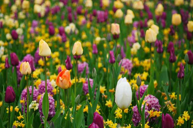Global Warming Spring Arriving Earlier Environews Nigeria
