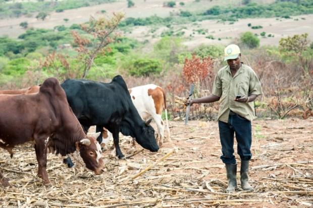 Kenya farmer  Kenya set to launch food safety authority Digitisation