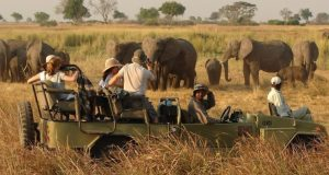 african-safari  International Day for Biodiversity: Nature-based tourism holds key to conserving nature – IUCN african safari e1495467702748