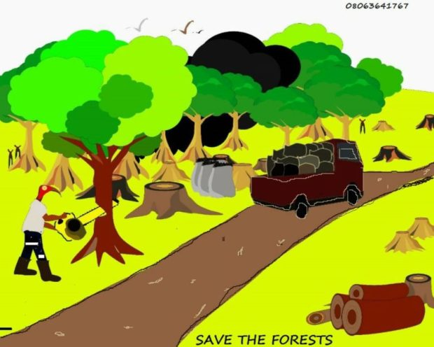 Forest  Don flays charcoal use, urges provision of alternatives Forest 1 e1503171581746