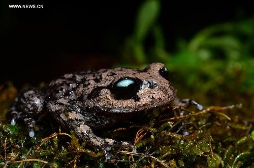 China amphibian species  China discovered 21 new amphibian, reptile species in 2017, says report China