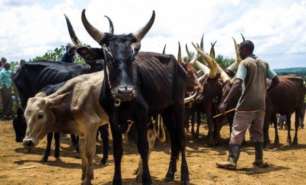 Ugandan nomadic pastoralis