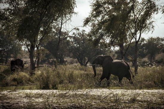 Chewore Safari Area