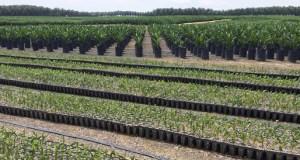 Golden Agri-Resources