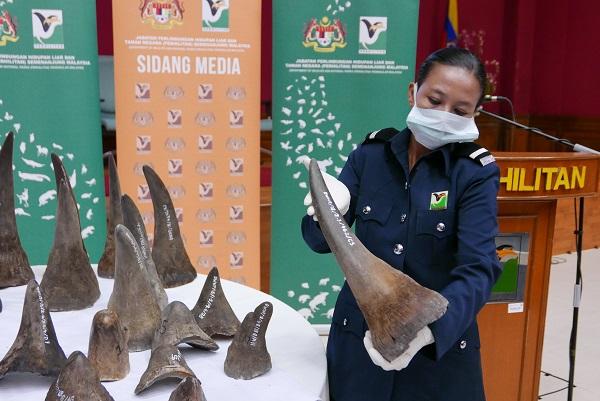 rhino horn seizure  Malaysia makes significant Viet Nam-bound rhino horn seizure IMG 20180821 162502