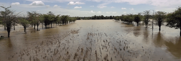 Flooded farmland  Five things to know about climate change, by Norvergence FAO Report 0