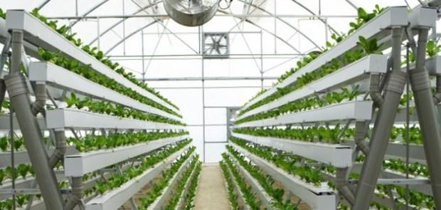 Hydroponic farming  Nigerian farmers not ready for hydroponic farming, says agriculturist hydroponic farming
