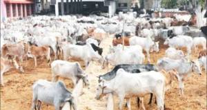Ruga settlement  'Ruga Settlement' to address farmers, herders' conflicts – Presidency Ruga