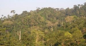 Atewa Range Forest Reserve