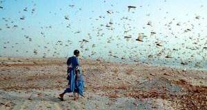 Desert locust swarm  EU mobilises €10m more in response to East Africa desert locust outbreak Desert locust swarm