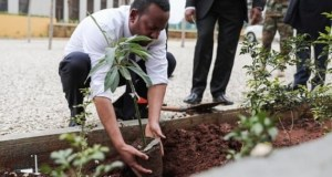Ethiopia tree planting  Ethiopia claims 350m trees planted in a day 'a world record' Ethiopia