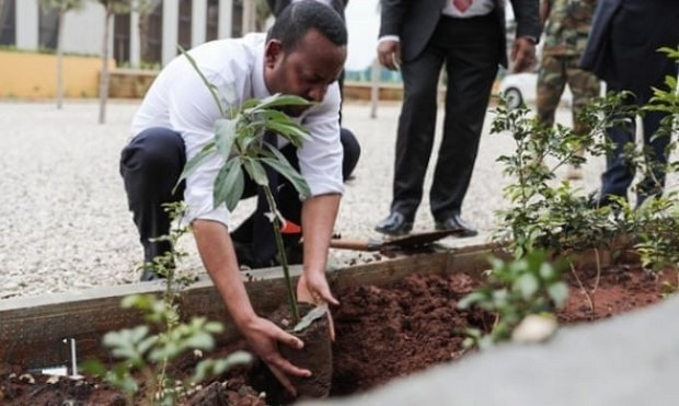 Ethiopia tree planting  Group mobilises 1m people for 300,000 trees planting in Kaduna Ethiopia