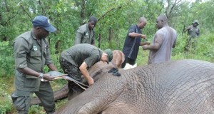 WCS Elephants