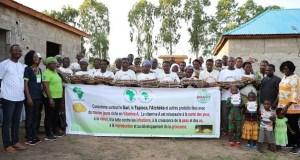 Yellow cassava sensitisation