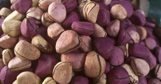 Kola Nut  Keeping Bissy: Sustainable new use for the Nigerian kola nut Kola Nut