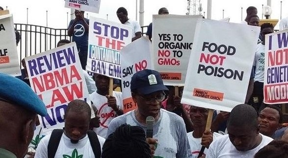 Why govt should ban GMOs, revoke biosafety agency law, by campaigners Nnimmo