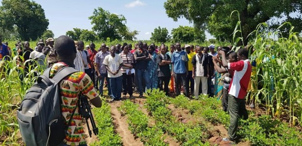 Sorghum production   TAAT deploys climate smart technologies to boost sorghum production in the Sahel Participants on the first day of farmer field school in Burkina Faso