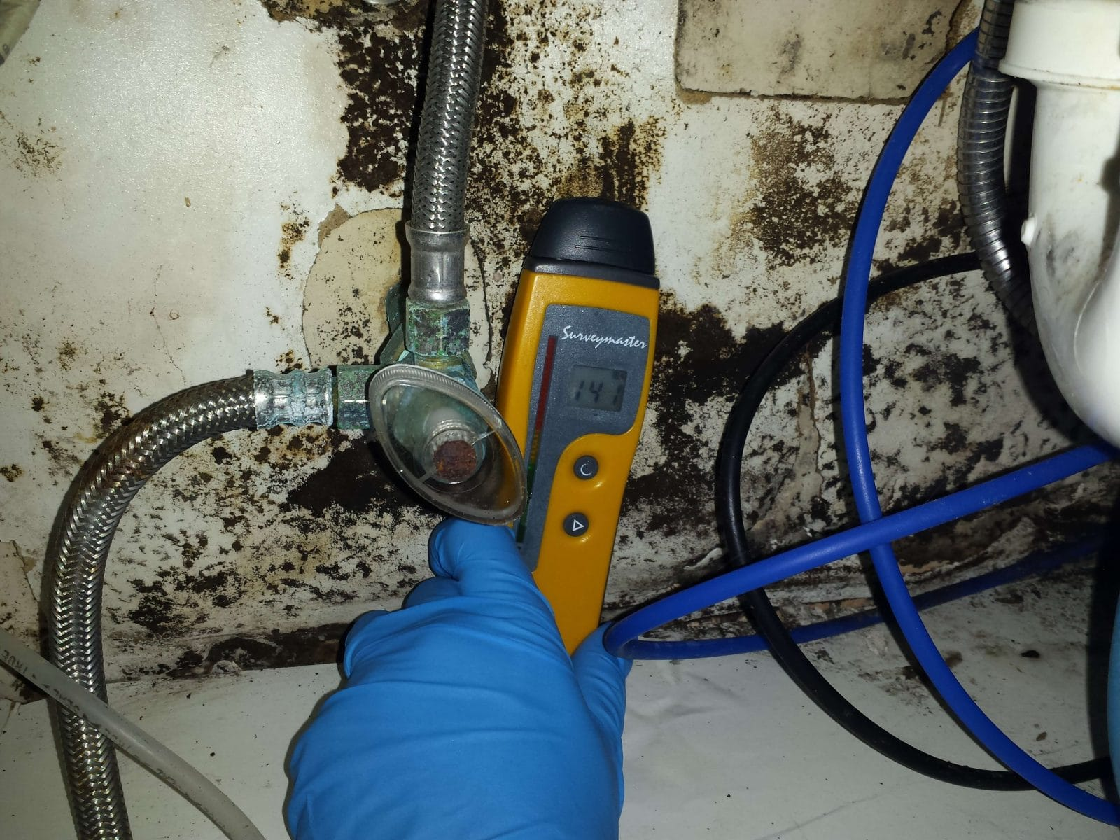 kitchen mold how to prevent and get