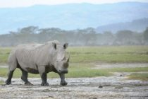 Green light to domestic trade in rhino horn