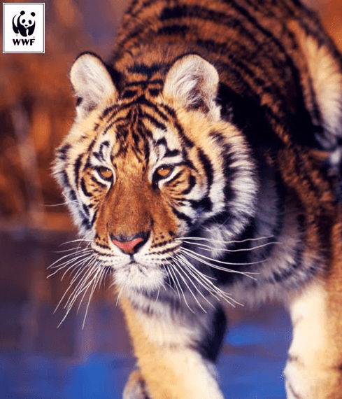 World Wildlife Fund Petitions for the Animal Welfare Act