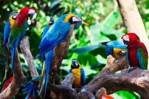 Amazon rainforest parrots
