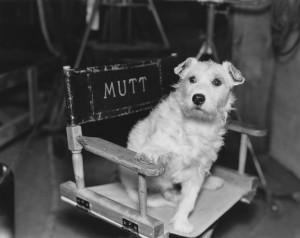 Dog in Hollywood movie