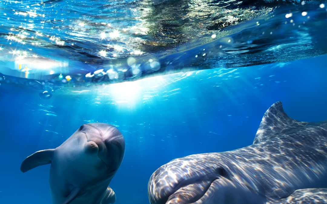 Dolphin Action and Protection Group Saves Cetaceans One Plastic Bottle at a Time
