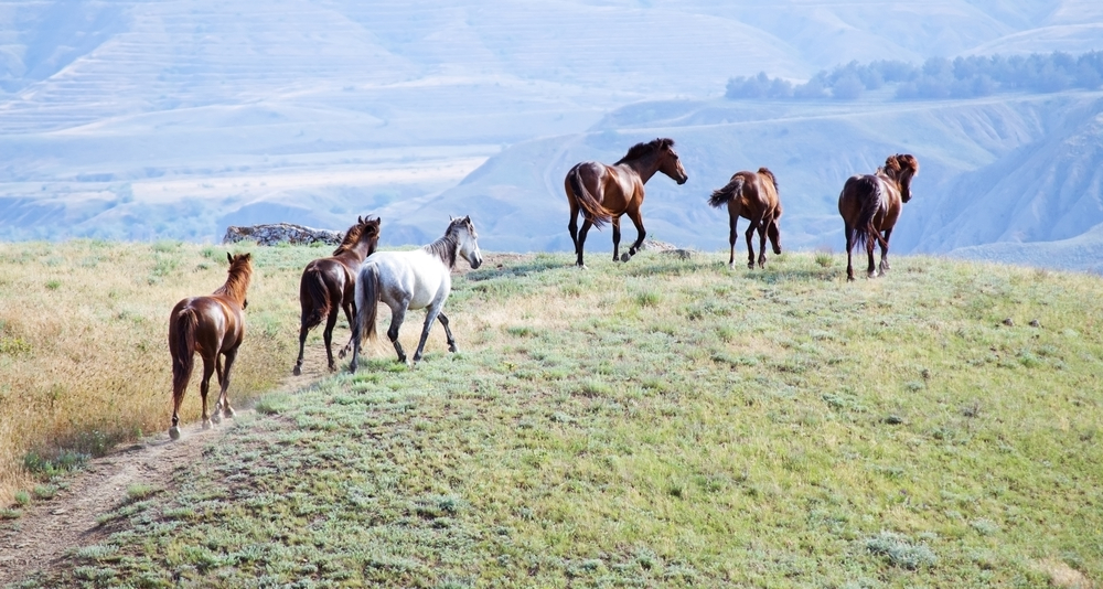 Lawsuits Filed in Nevada over Mismanagement of Wild horses