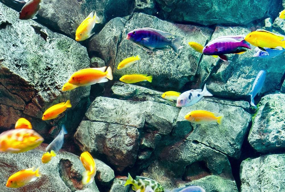 Fish Size Decrease Linked to Deforestation