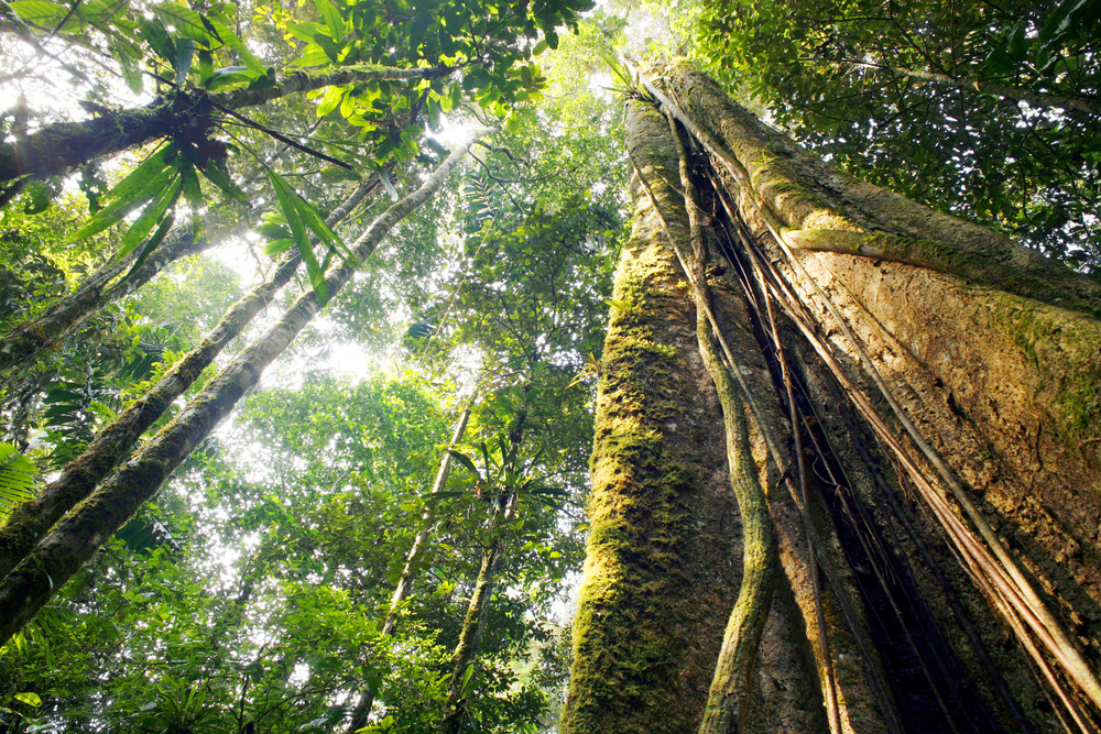Peru Investigates the Killing of Environmental Advocate Edwin Chota