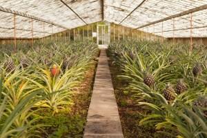 greenhouse, farm
