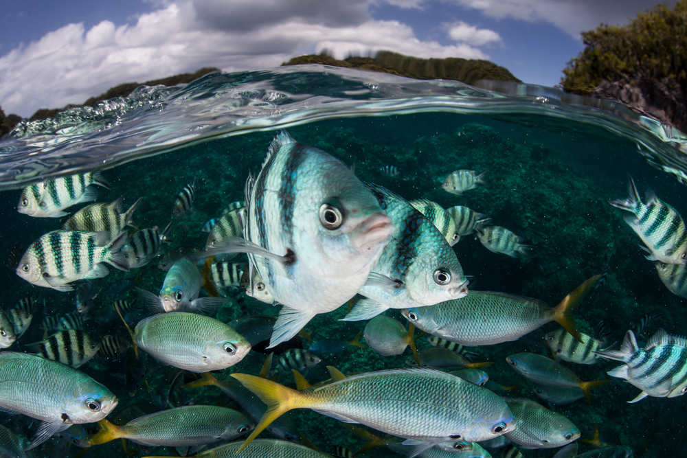 Some Fish Can Adjust Sex Ratios in Warming Water