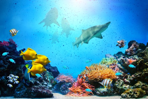 Coral reefs depend on waste products from larger fish such as barracudas, grouper and others, for nitrogen and phosphorous.
