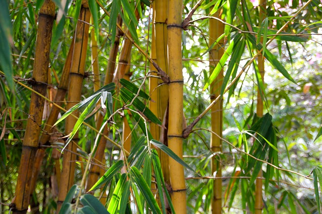 Close up on bamboo stalks